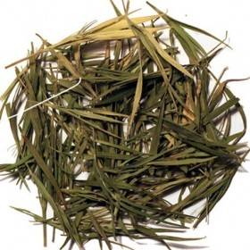Bambou «Montagne du Tigre»